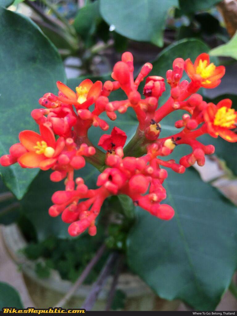 FIXED_Flower 2